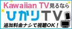 Kawaiian for ひかりTV 4K​